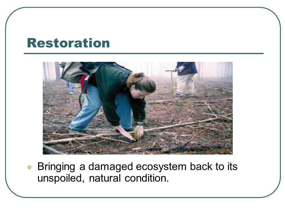 Restoration Bringing a damaged ecosystem back to its unspoiled, natural condition.