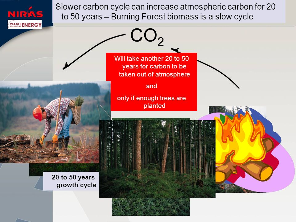 CO 2 In Atmosphere Will take another 20 to 50 years for carbon to be taken out of atmosphere and only if enough trees are planted Slower carbon cycle can increase atmospheric carbon for 20 to 50 years – Burning Forest biomass is a slow cycle 20 to 50 years growth cycle Seedlings