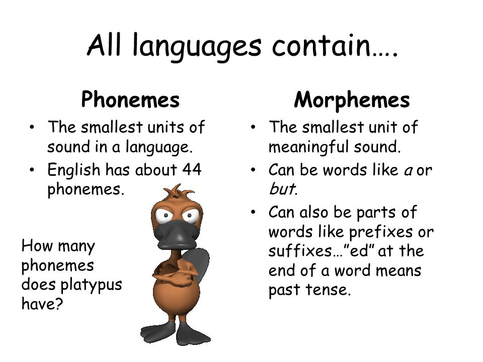 All languages contain…. Phonemes The smallest units of sound in a language.
