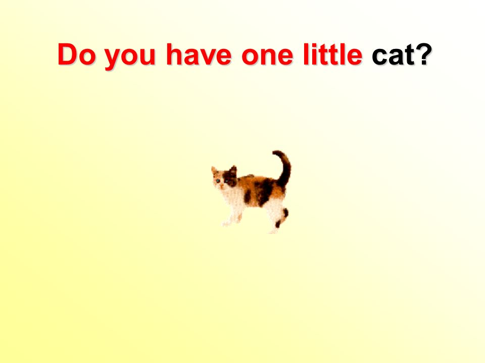 Do you have one little cat