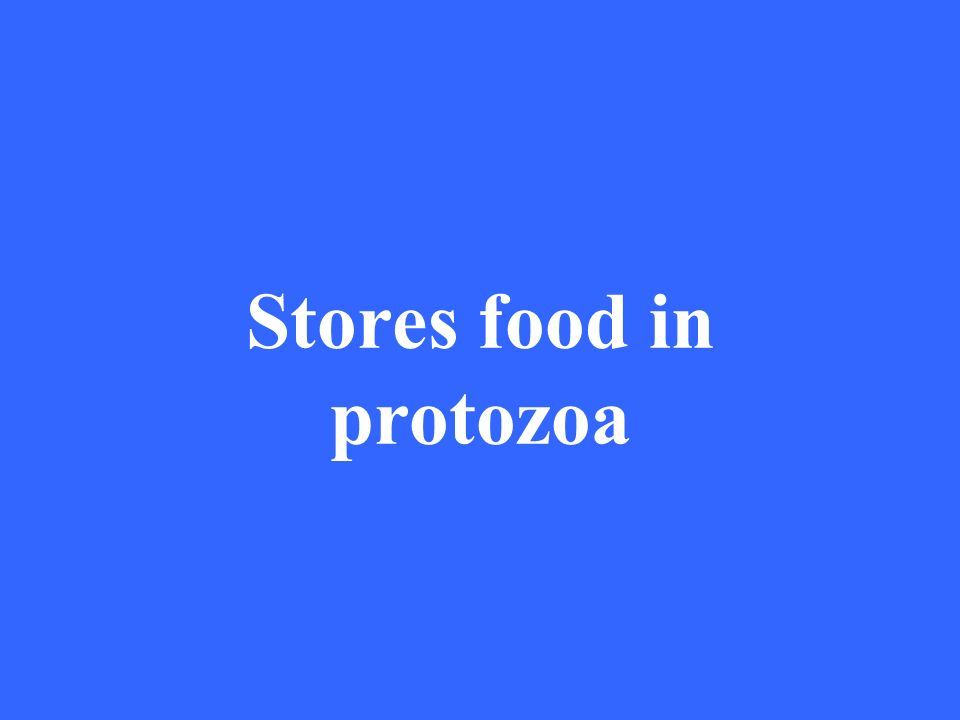 Stores food in protozoa