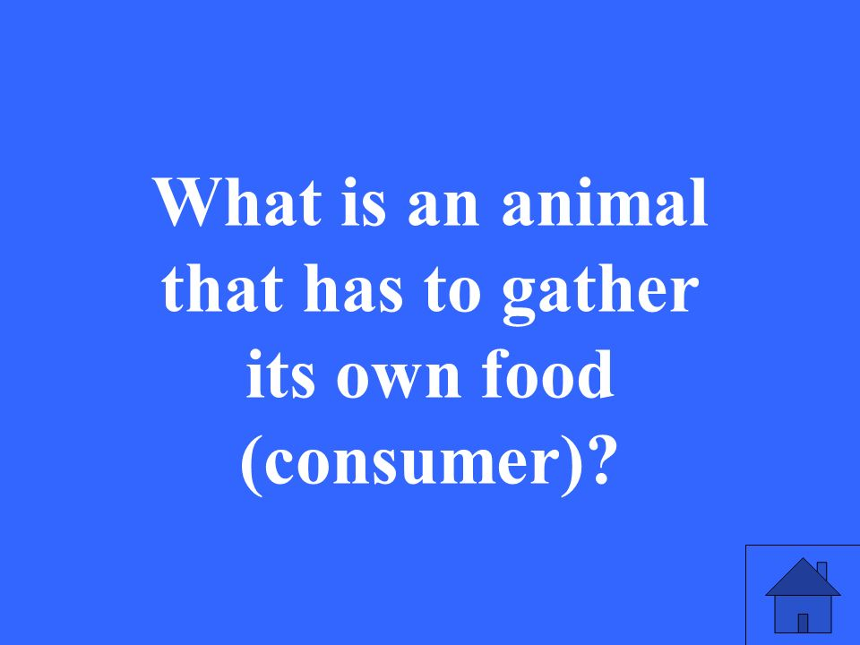 What is an animal that has to gather its own food (consumer)