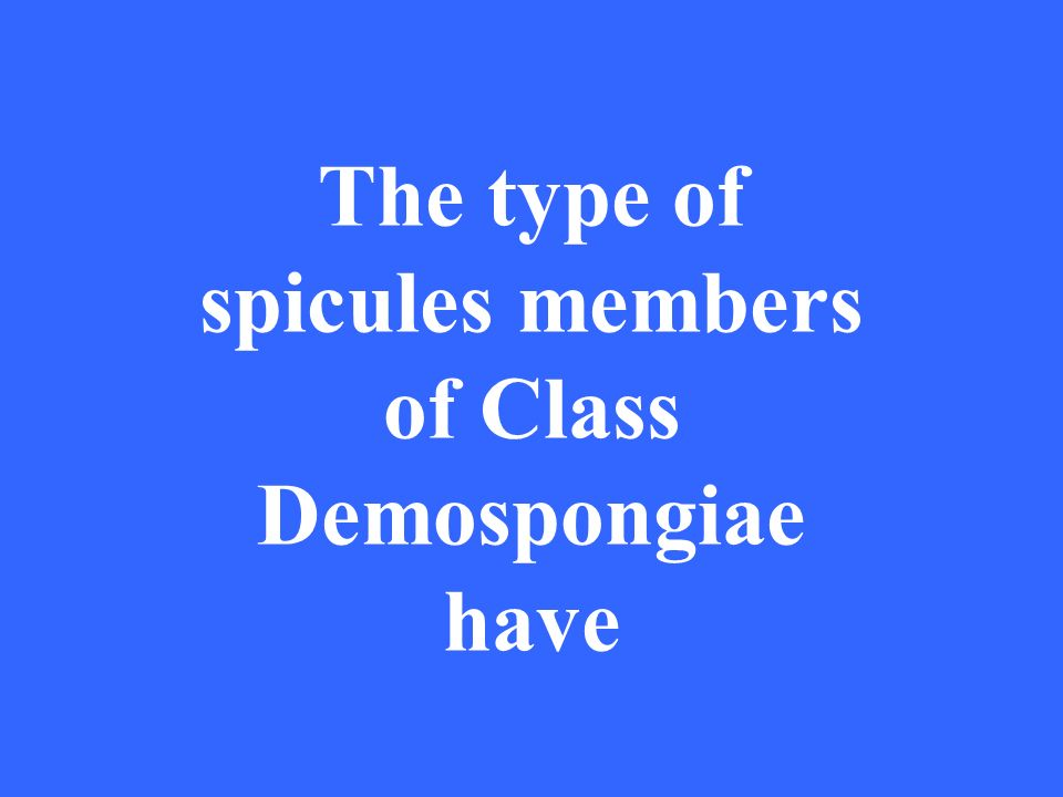The type of spicules members of Class Demospongiae have