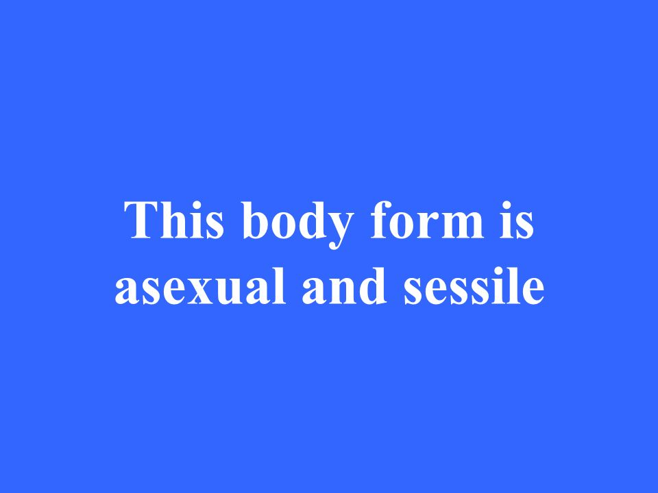 This body form is asexual and sessile