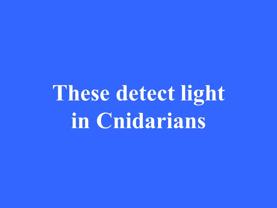 These detect light in Cnidarians