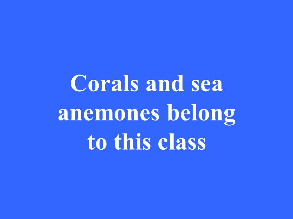 Corals and sea anemones belong to this class