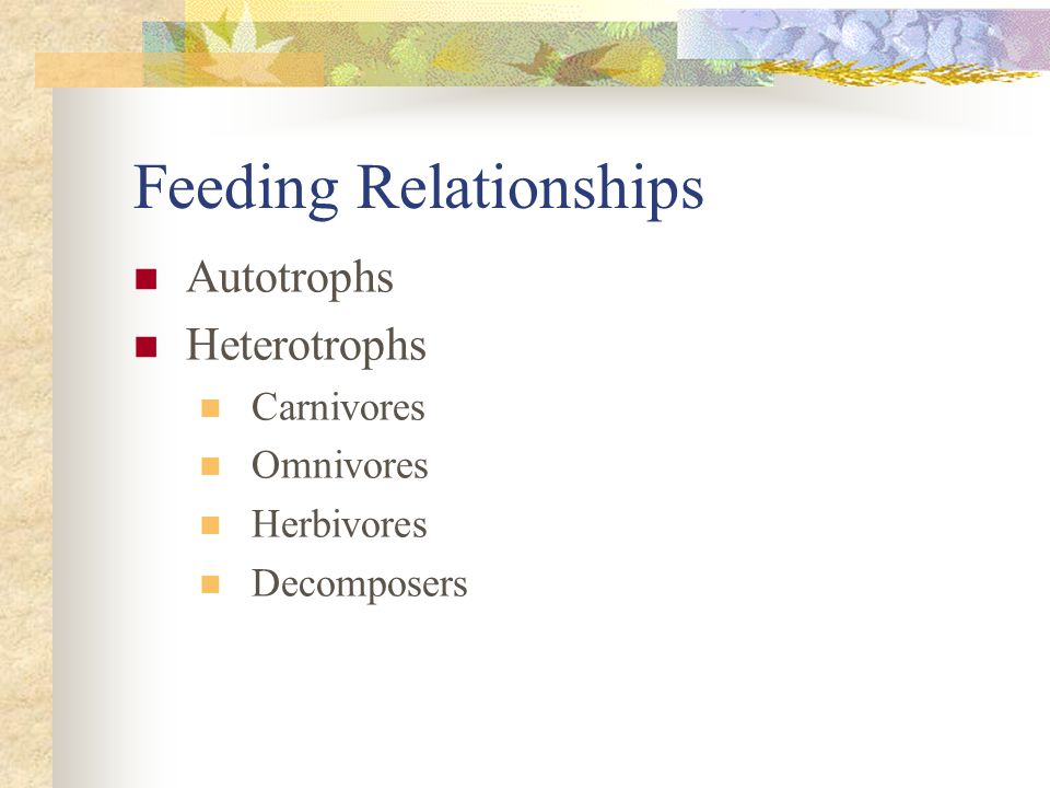 Feeding Relationships Autotrophs Heterotrophs Carnivores Omnivores Herbivores Decomposers