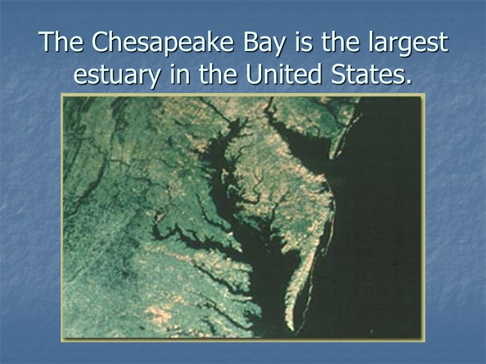 The Chesapeake Bay is the largest estuary in the United States.