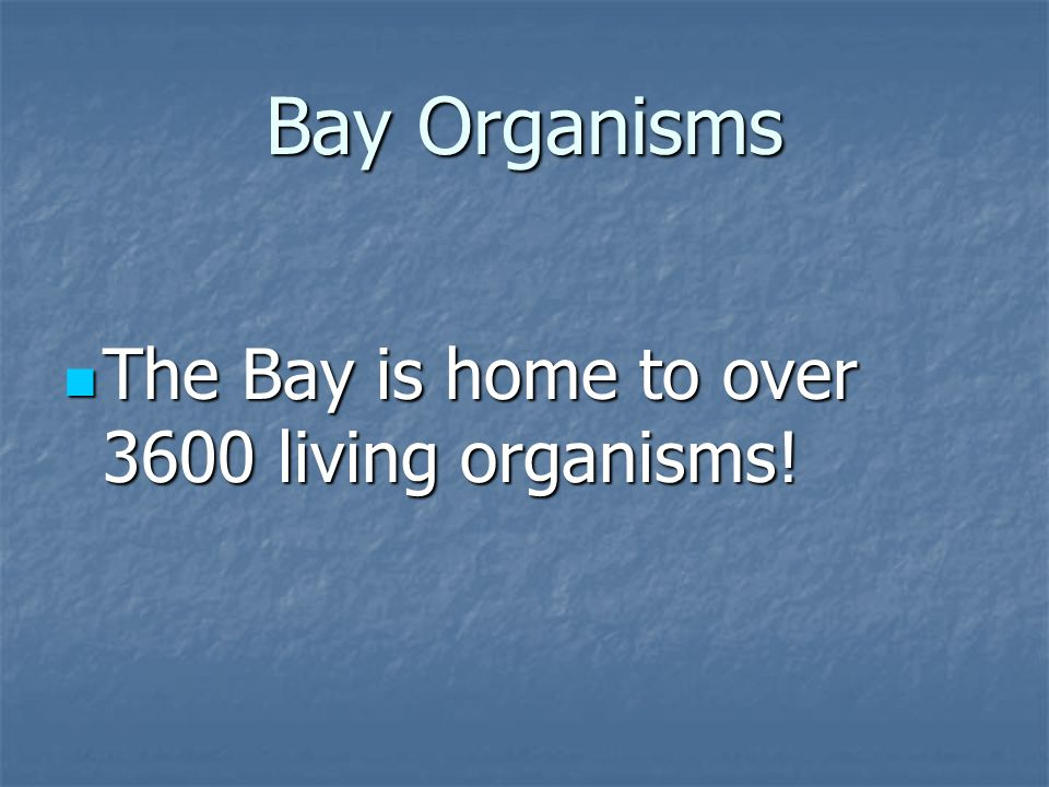 Bay Organisms The Bay is home to over 3600 living organisms!