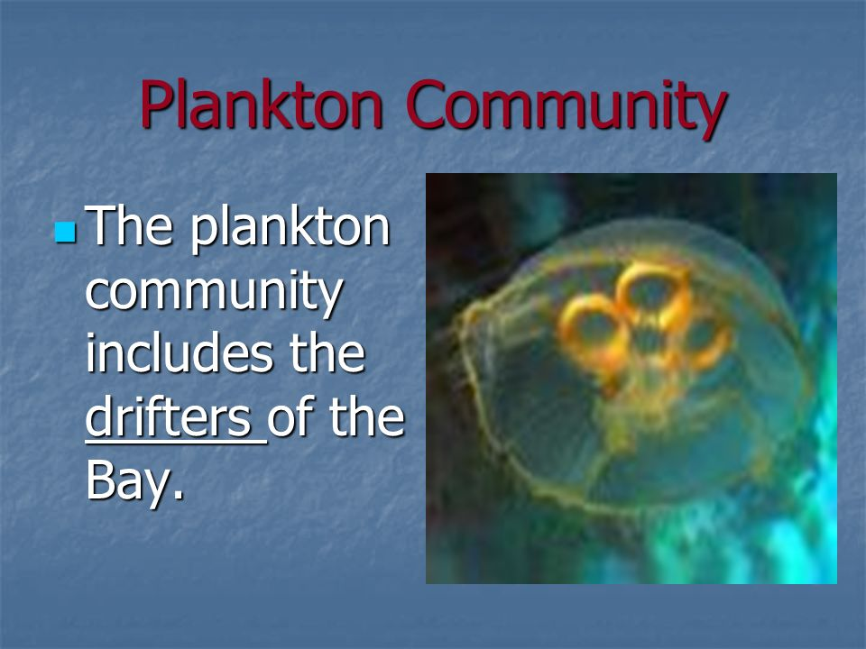 Plankton Community The plankton community includes the drifters of the Bay.