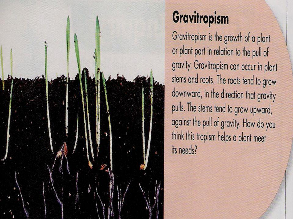 Tropisms are ways that plants change their direction of growth in response to the environment.