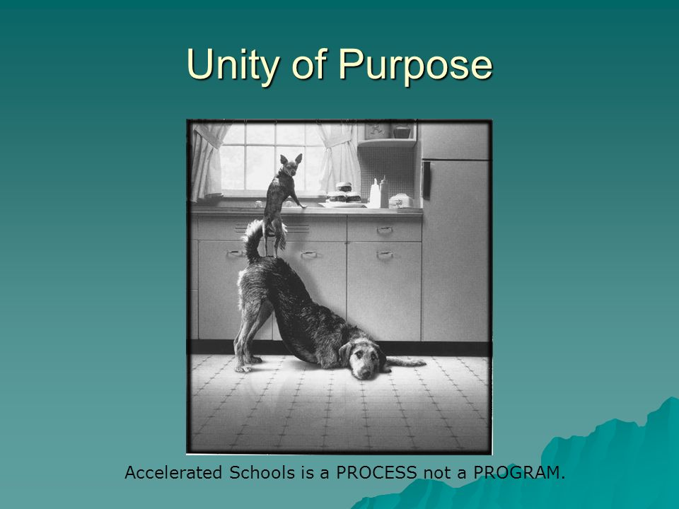 Unity of Purpose Accelerated Schools is a PROCESS not a PROGRAM.