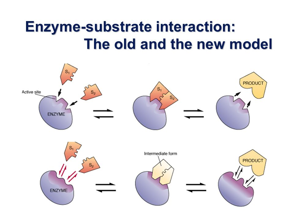 Enzyme-substrate interaction: The old and the new model