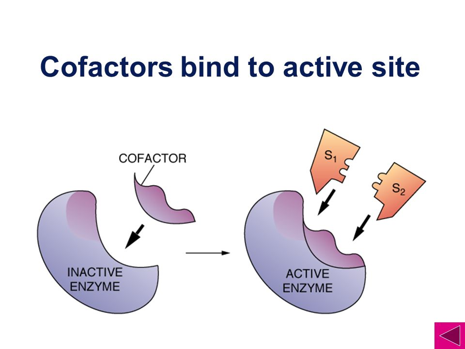 Cofactors bind to active site