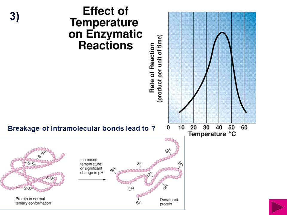 3) Breakage of intramolecular bonds lead to