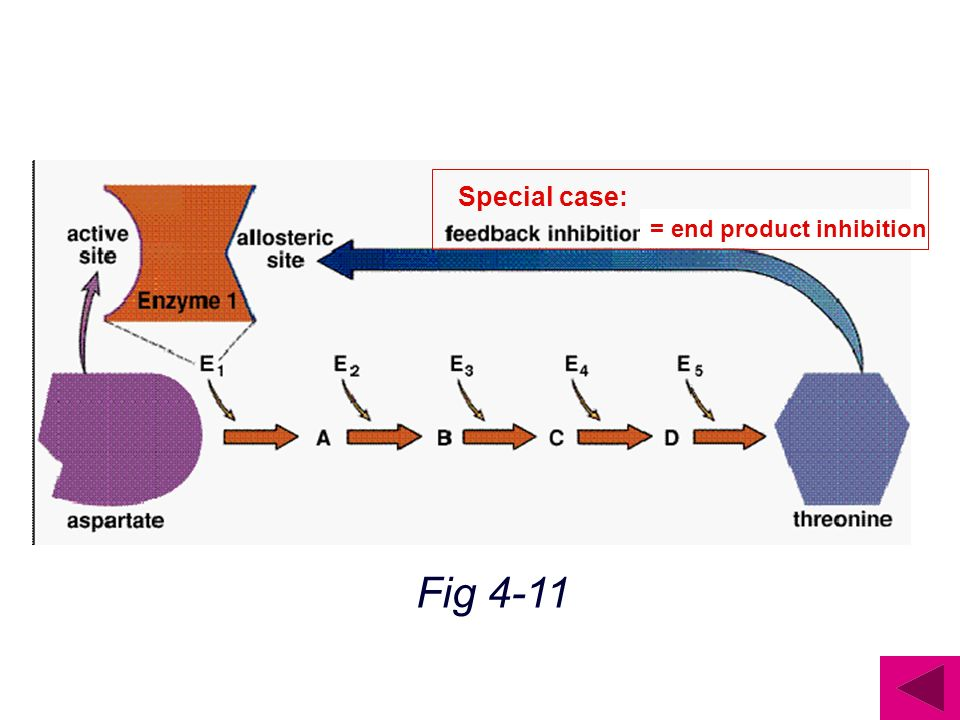 = end product inhibition Special case: Fig 4-11