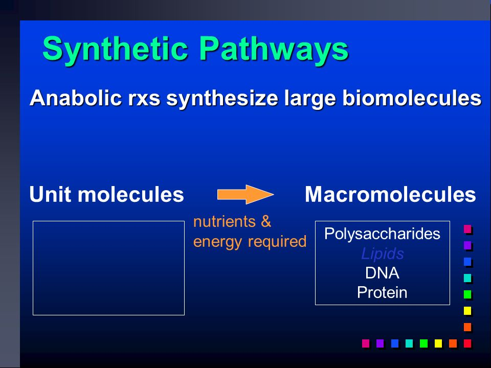 Synthetic Pathways Unit molecules Macromolecules Polysaccharides Lipids DNA Protein nutrients & energy required Anabolic rxs synthesize large biomolecules