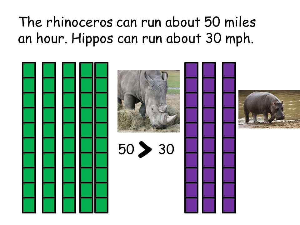 Which one m t be true about the Wh t Rhinoceros.