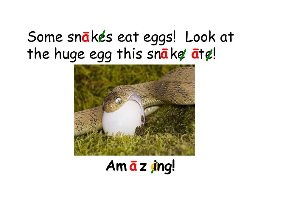 Some sn kes eat eggs! Look at the huge egg this sn ke te! ā/ āā / / Am zeāing! /