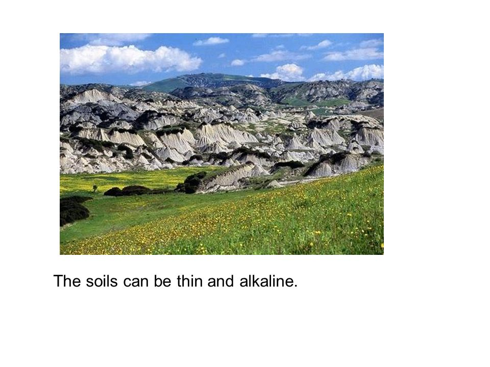 The soils can be thin and alkaline.