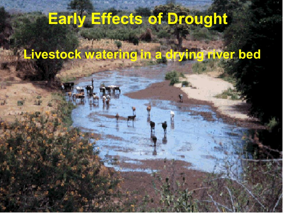 Livestock watering in a drying river bed Early Effects of Drought