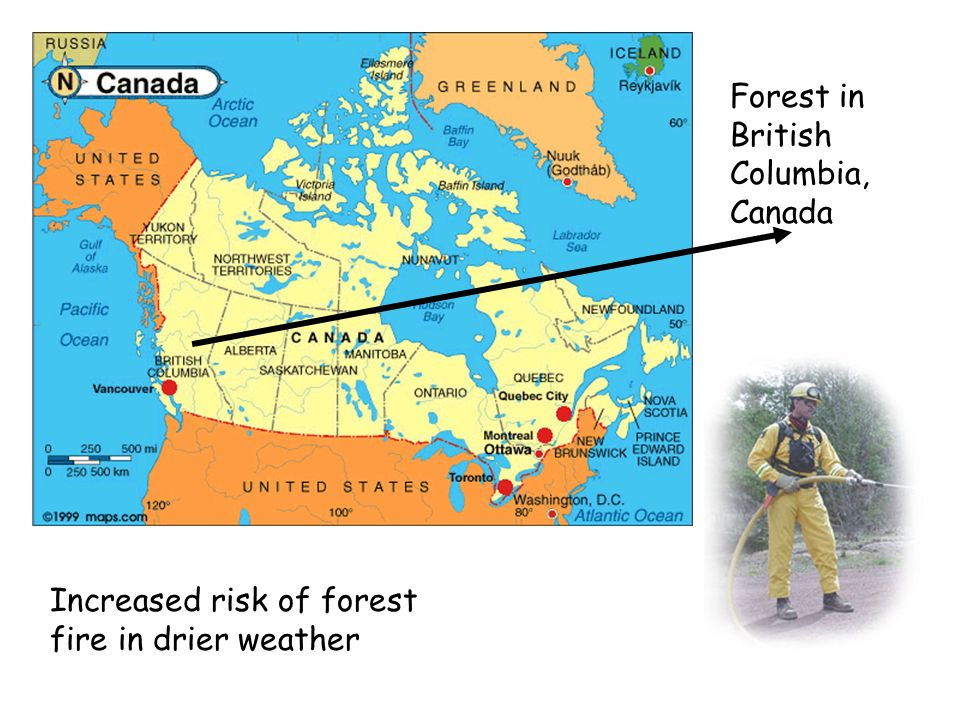 Canadian Forests Like cold climates but lie south of the Arctic Trees here would suffer in warmer climates and drier conditions i.e.