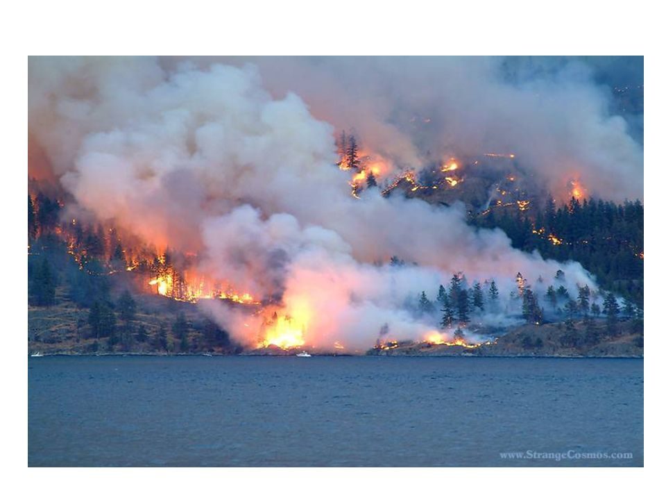 Forest in British Columbia, Canada Increased risk of forest fire in drier weather