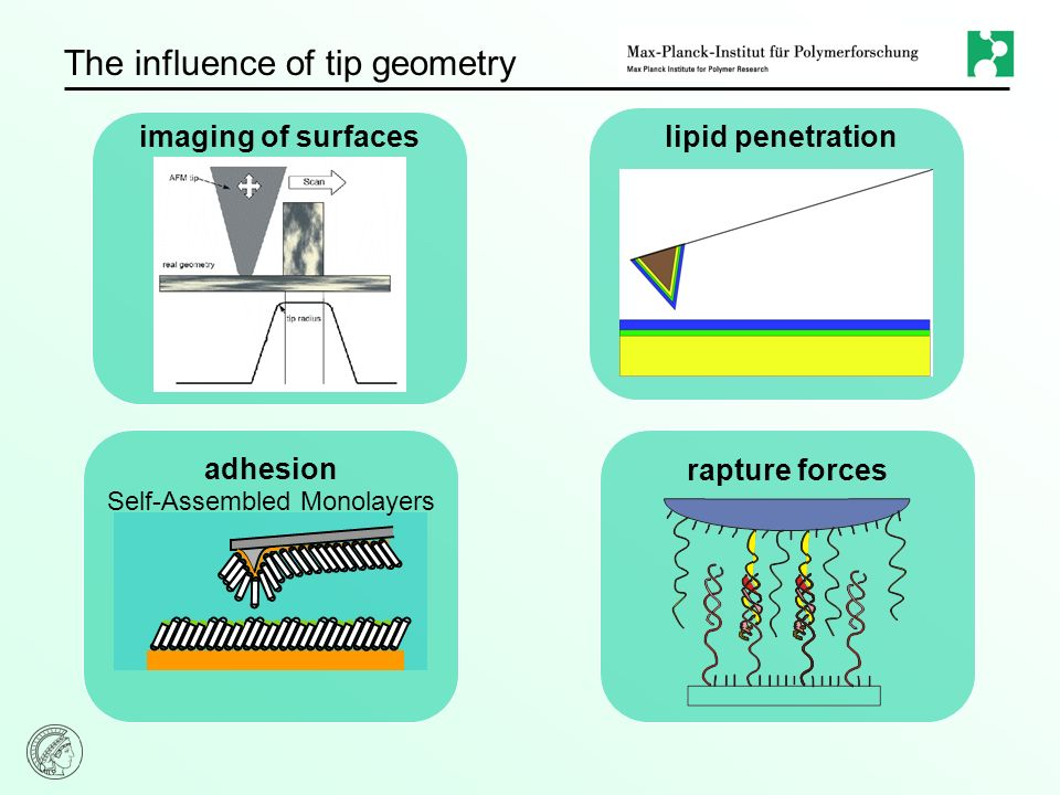 The influence of tip geometry imaging of surfaces adhesion rapture forces lipid penetration Self-Assembled Monolayers