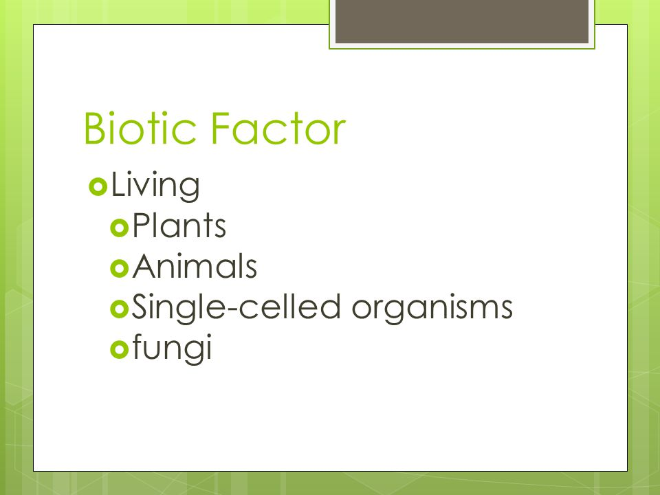 Biotic Factor  Living  Plants  Animals  Single-celled organisms  fungi