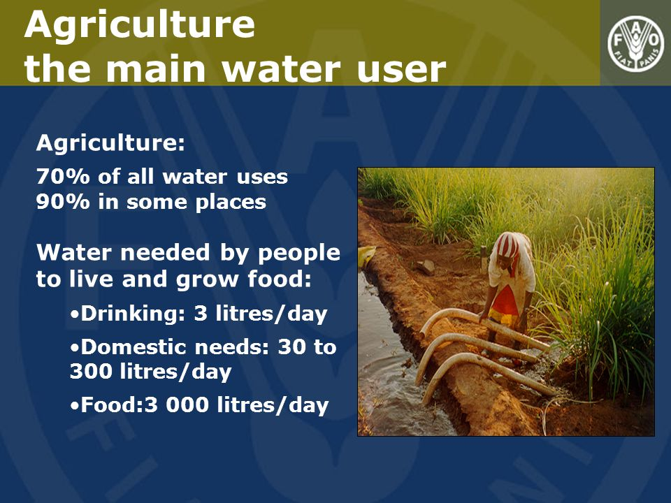 Agriculture the main water user Agriculture: 70% of all water uses 90% in some places Water needed by people to live and grow food: Drinking: 3 litres/day Domestic needs: 30 to 300 litres/day Food:3 000 litres/day