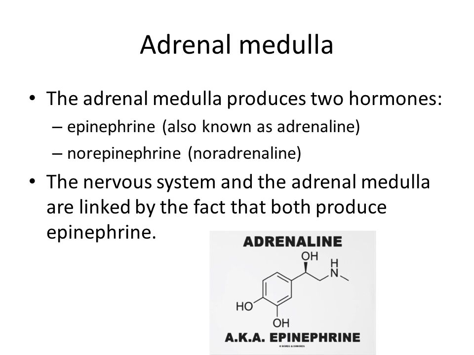 Adrenal medulla The adrenal medulla produces two hormones: – epinephrine (also known as adrenaline) – norepinephrine (noradrenaline) The nervous system and the adrenal medulla are linked by the fact that both produce epinephrine.