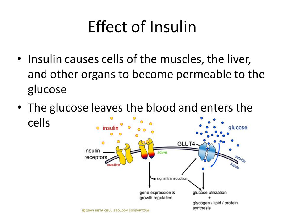 Effect of Insulin Insulin causes cells of the muscles, the liver, and other organs to become permeable to the glucose The glucose leaves the blood and enters the cells