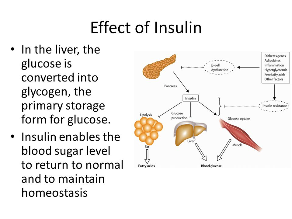 Effect of Insulin In the liver, the glucose is converted into glycogen, the primary storage form for glucose.