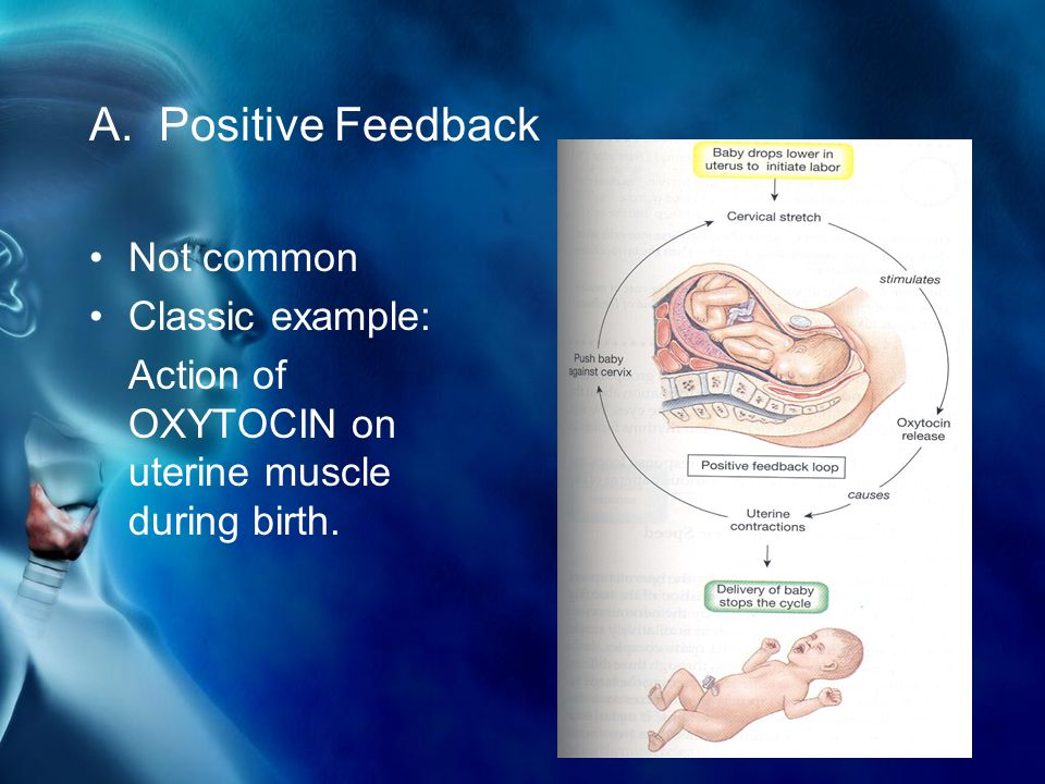 A. Positive Feedback Not common Classic example: Action of OXYTOCIN on uterine muscle during birth.