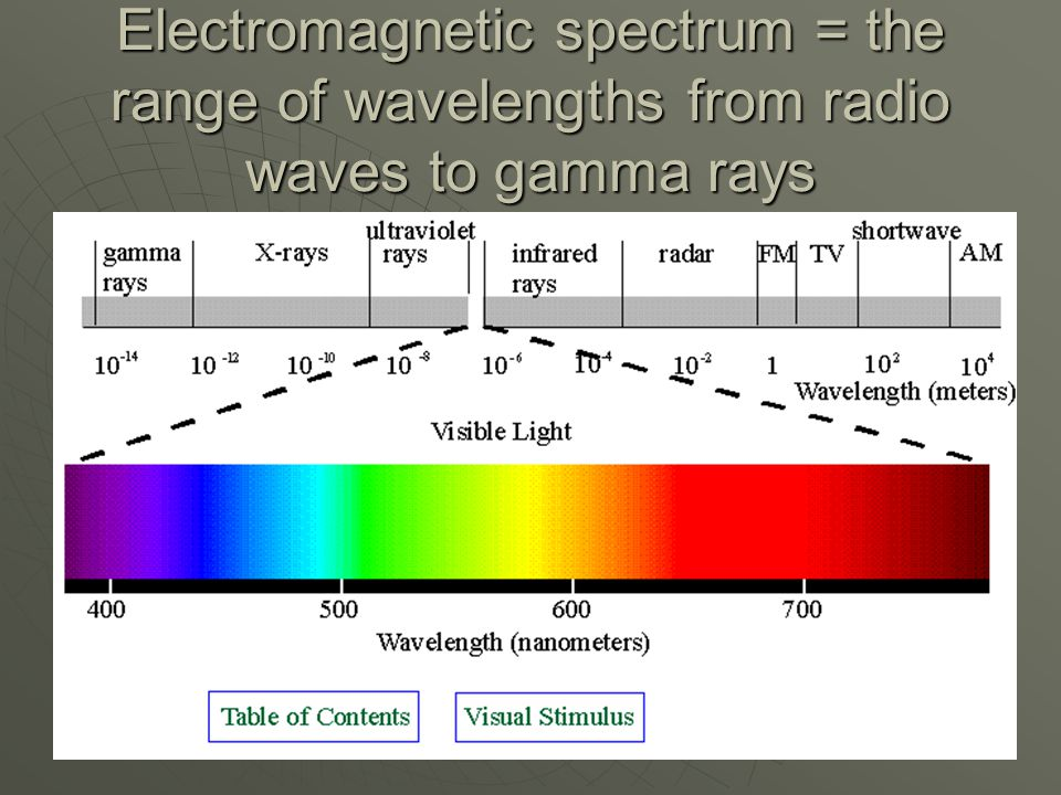Electromagnetic spectrum = the range of wavelengths from radio waves to gamma rays