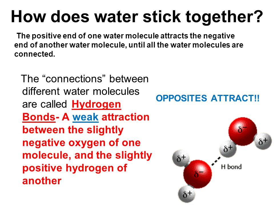 How does water stick together.