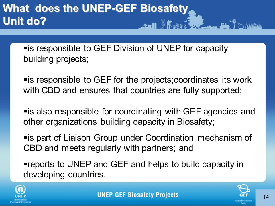 14  is responsible to GEF Division of UNEP for capacity building projects;  is responsible to GEF for the projects;coordinates its work with CBD and ensures that countries are fully supported;  is also responsible for coordinating with GEF agencies and other organizations building capacity in Biosafety;  is part of Liaison Group under Coordination mechanism of CBD and meets regularly with partners; and  reports to UNEP and GEF and helps to build capacity in developing countries.