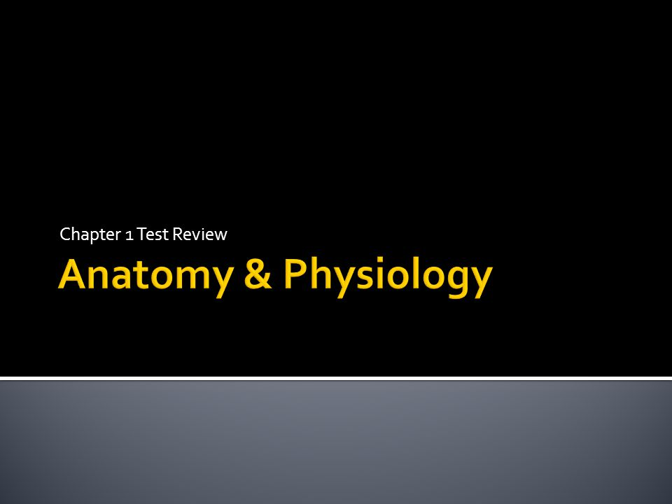 Chapter 1 Test Review 1 Anatomy Is The Study Of How The Body And