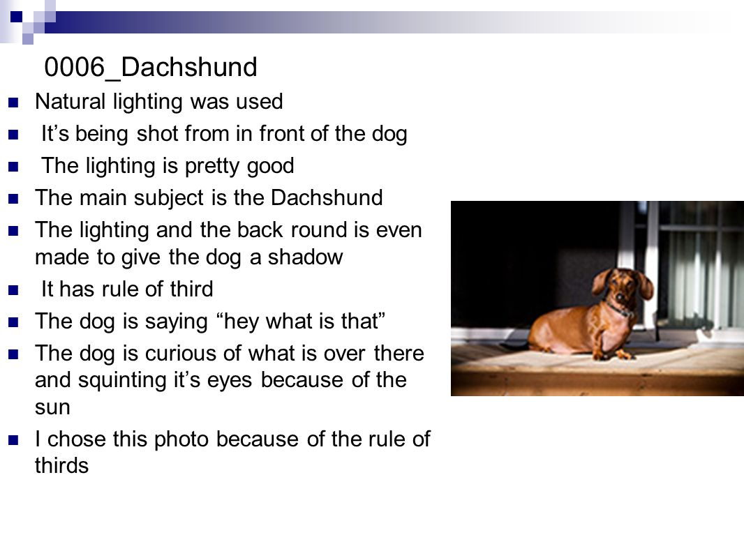 0006_Dachshund Natural lighting was used It's being shot from in front of the dog The lighting is pretty good The main subject is the Dachshund The lighting and the back round is even made to give the dog a shadow It has rule of third The dog is saying hey what is that The dog is curious of what is over there and squinting it's eyes because of the sun I chose this photo because of the rule of thirds