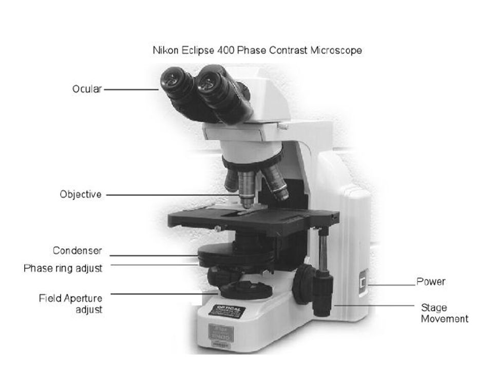 Introduction To Microscopy Objectives Learn To Use A Compound