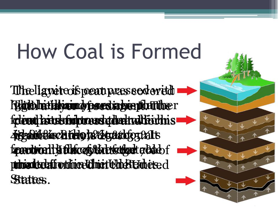 How Coal is Formed 300 million years ago plants died and formed peat which is an accumulation of partially decayed vegetable matter.