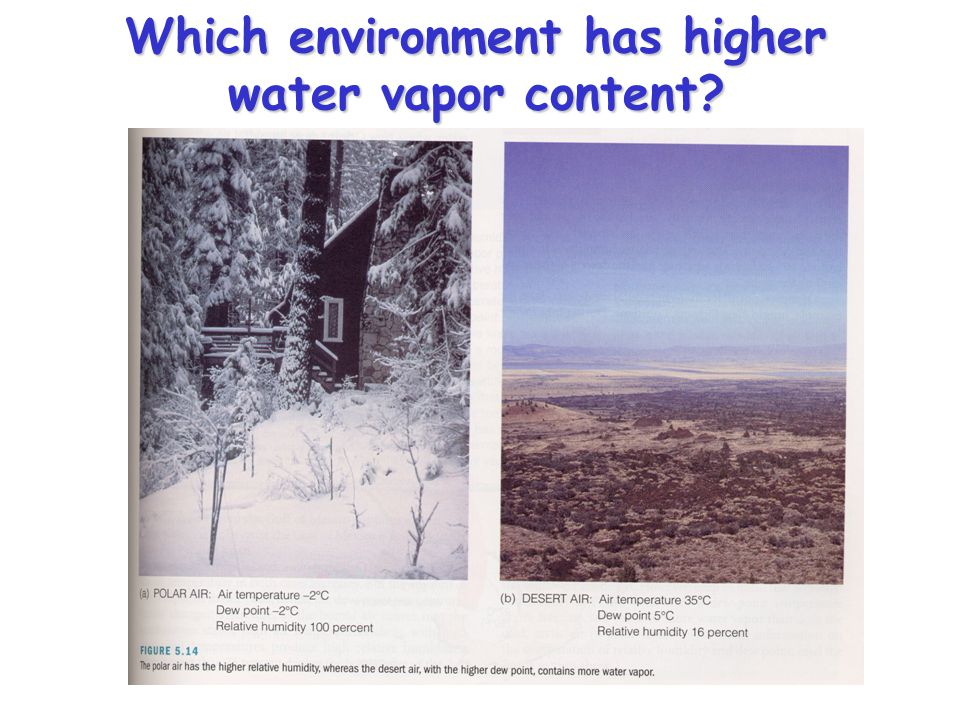Which environment has higher water vapor content