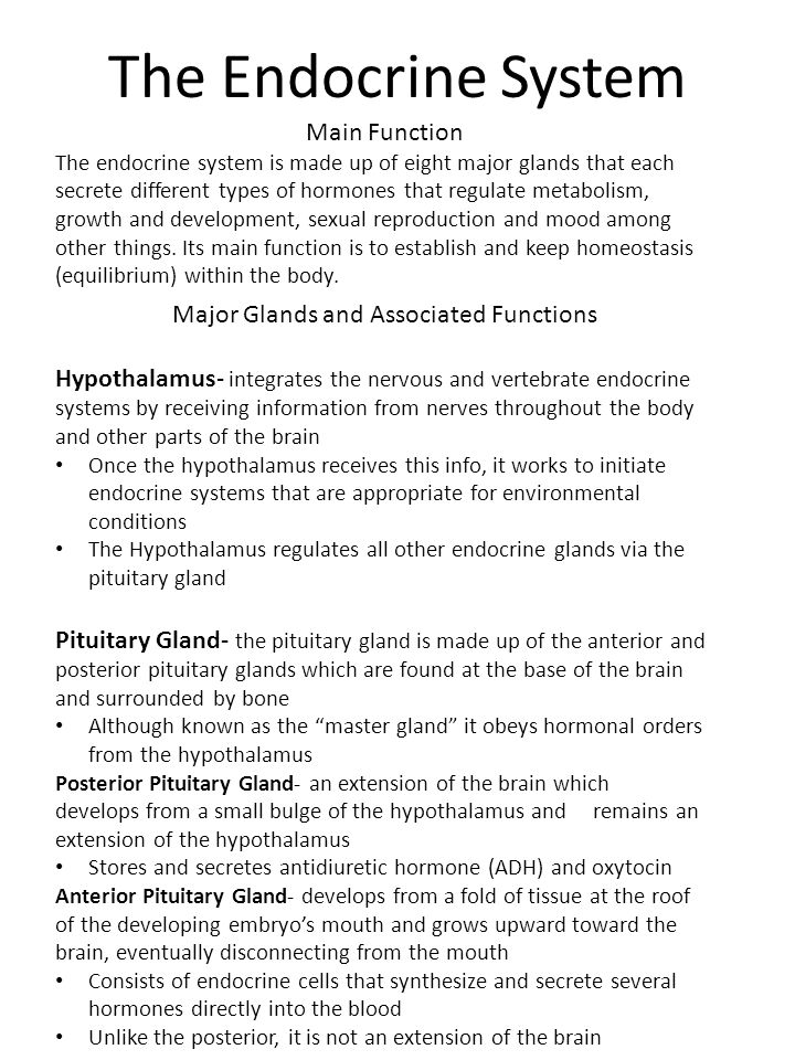 The Endocrine System Major Glands And Associated Functions