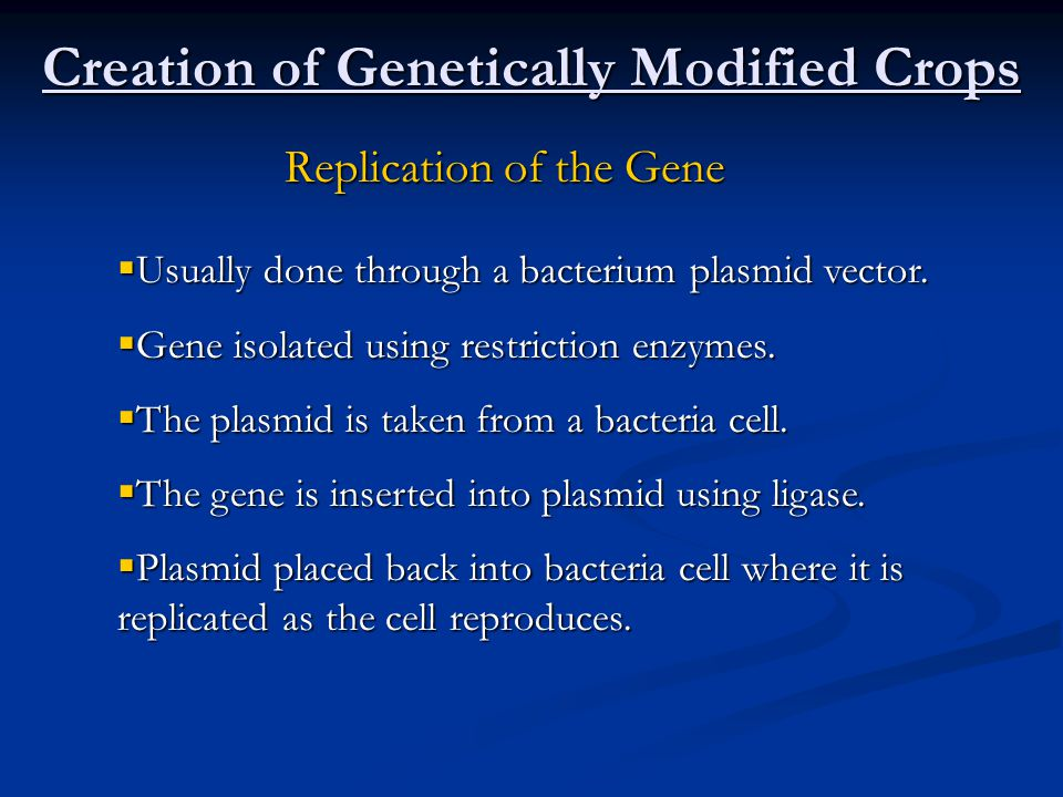 Creation of Genetically Modified Crops Replication of the Gene  Usually done through a bacterium plasmid vector.