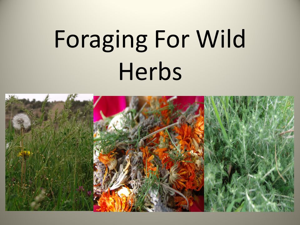 Foraging For Wild Herbs