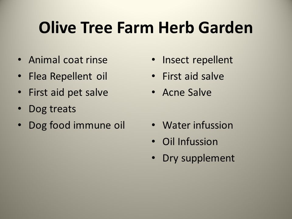 Olive Tree Farm Herb Garden Animal coat rinse Flea Repellent oil First aid pet salve Dog treats Dog food immune oil Insect repellent First aid salve Acne Salve Water infussion Oil Infussion Dry supplement