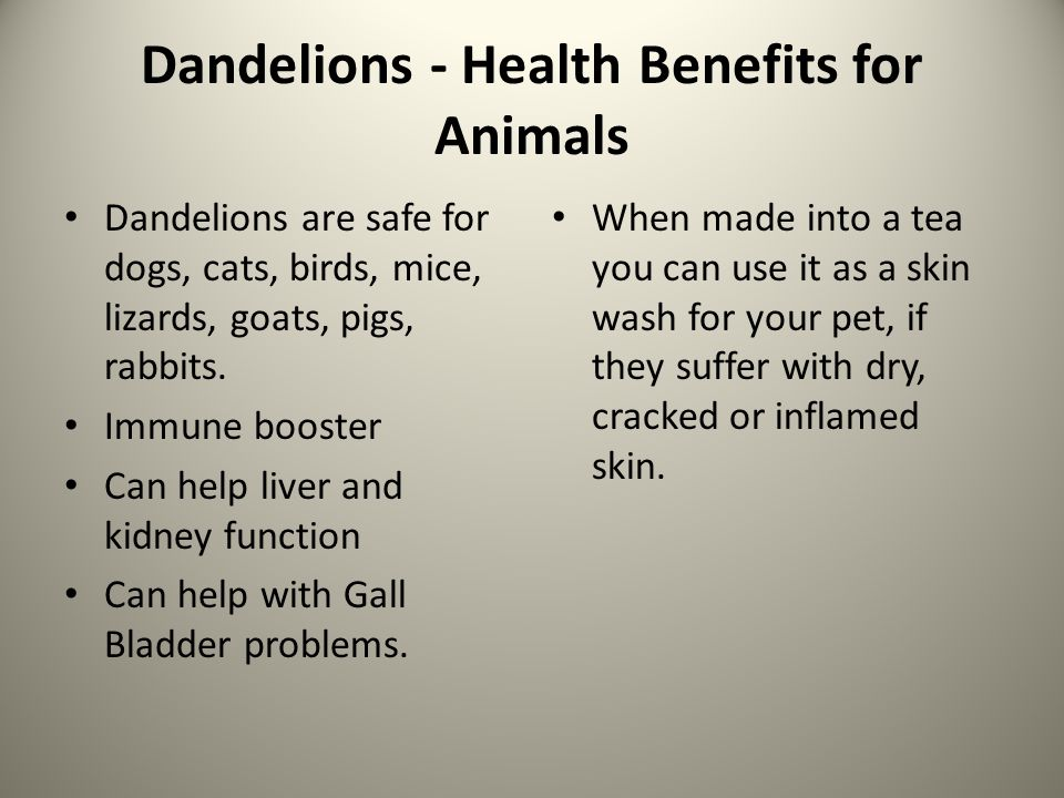 Dandelions - Health Benefits for Animals Dandelions are safe for dogs, cats, birds, mice, lizards, goats, pigs, rabbits.
