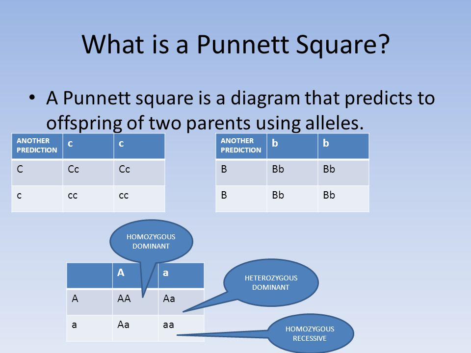 What is a Punnett Square.