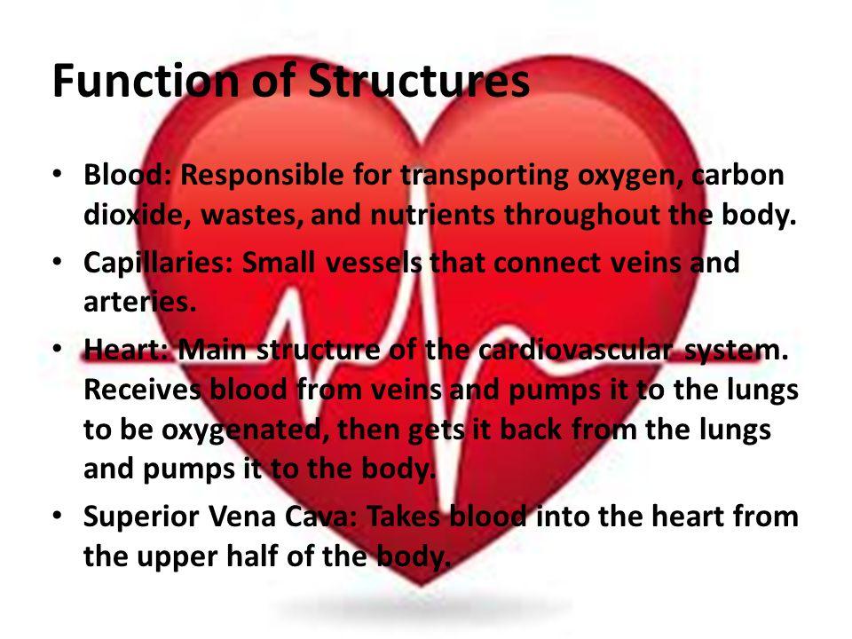 The Cardiovascular System Presentation By Cassidy Watson Ashley