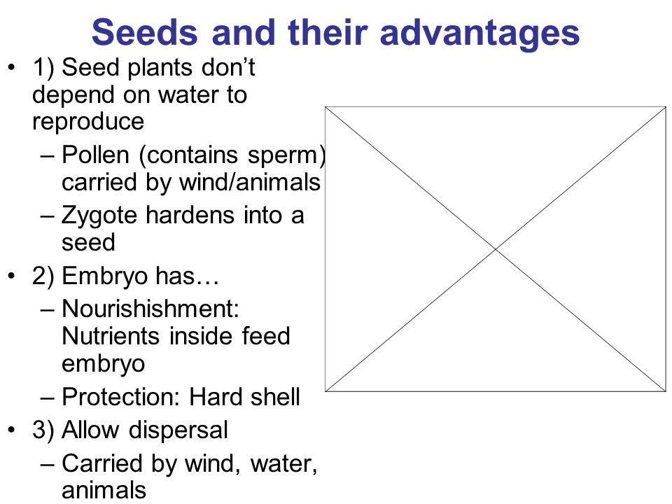 Hard seed in sperm